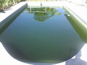 how to clean my green pool pool service west palm beach palm beach gardens palm beach shores. Black Bedroom Furniture Sets. Home Design Ideas